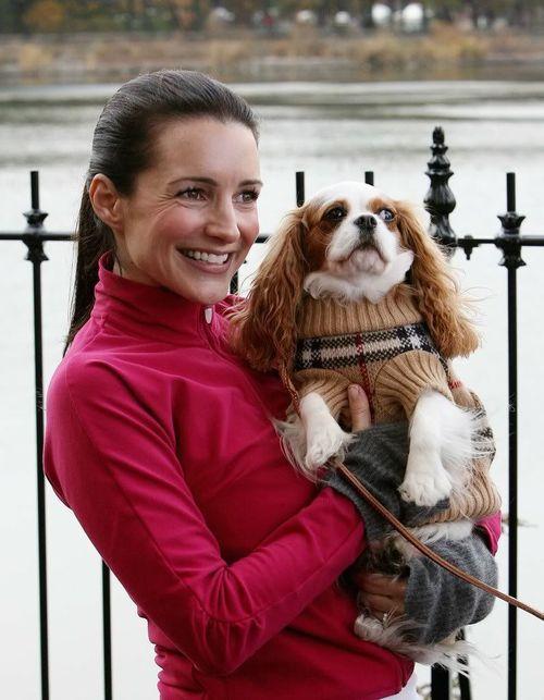 perro Cavalier King Charles Spaniel sexo en nueva york