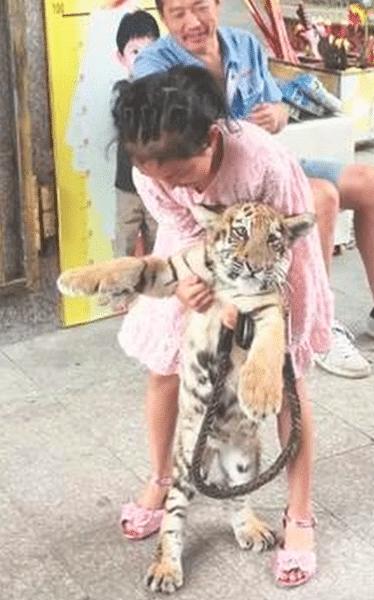 mascota bebé tigre