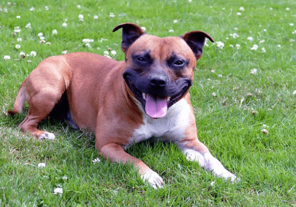 best dogs for new owners