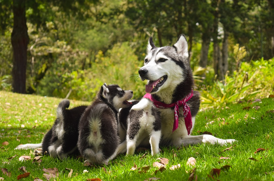 Breast cancer in dogs requires immediate treatment.