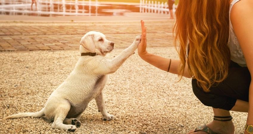 cachorro juega con su dueña
