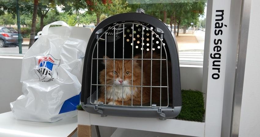 gato transportin veterinario