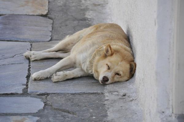 cane che dorme per strada su un fianco