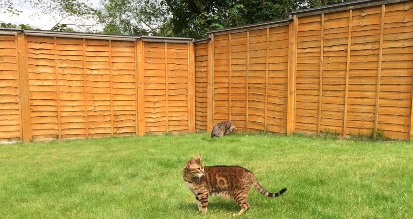 gato escapa casa solucion