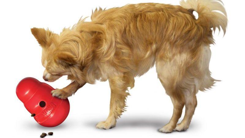 Un perro juega con el Kong Woddler
