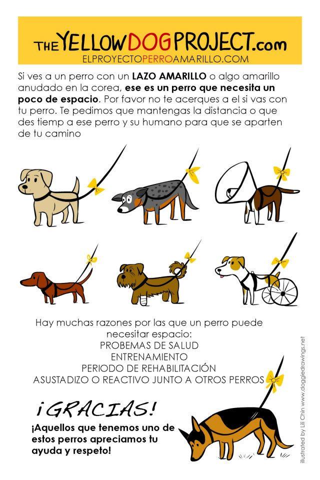 Cartel oficial The Yellow Dog Proyect en España.
