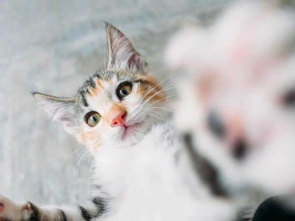gattino-che-abbraccia