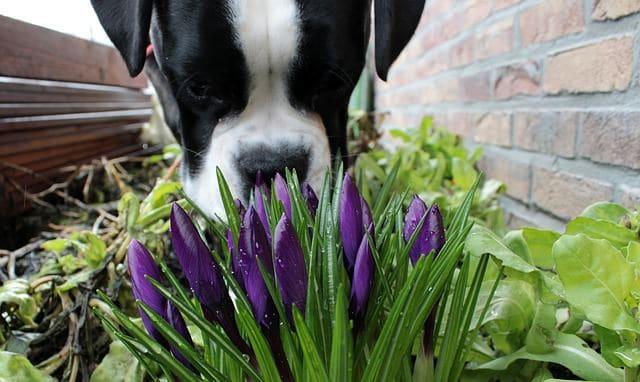 tu perro te odia olores