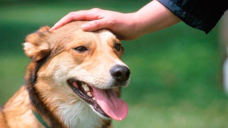 tu perro te odia tocarle la cara