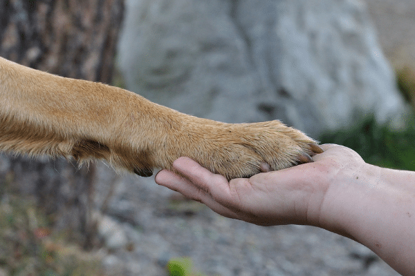 Teach your dog to give a paw