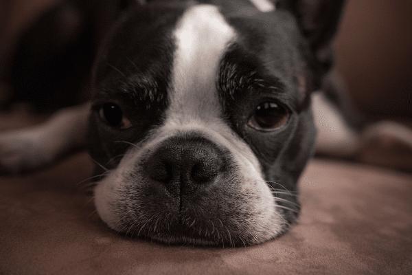 Mucus in dog poop