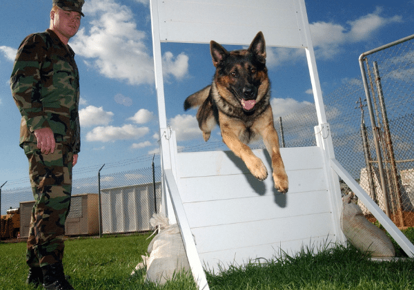 Easy dogs to train