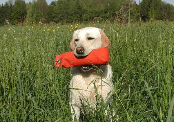 easy dog to train