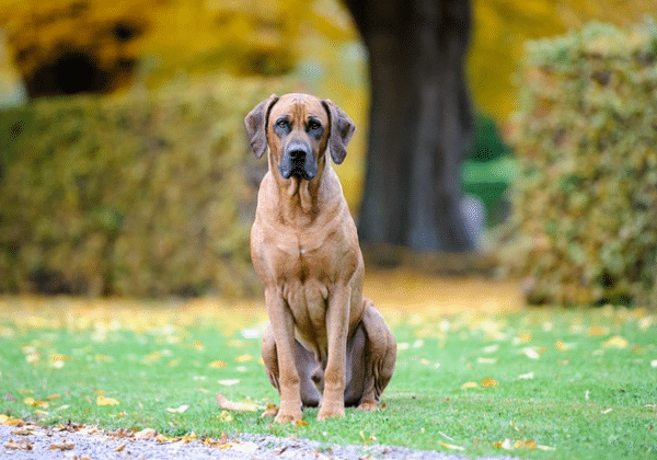 best hunting dogs