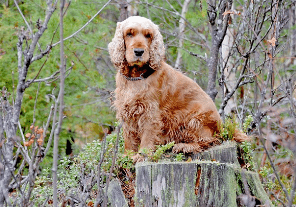 hunting breeds