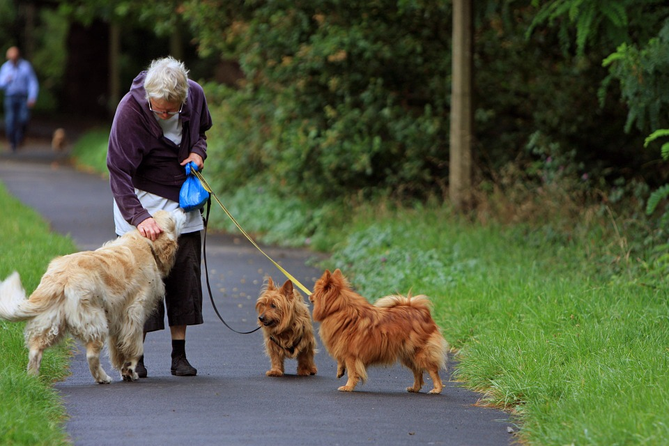 Dog aggression to other dogs can be distressing.