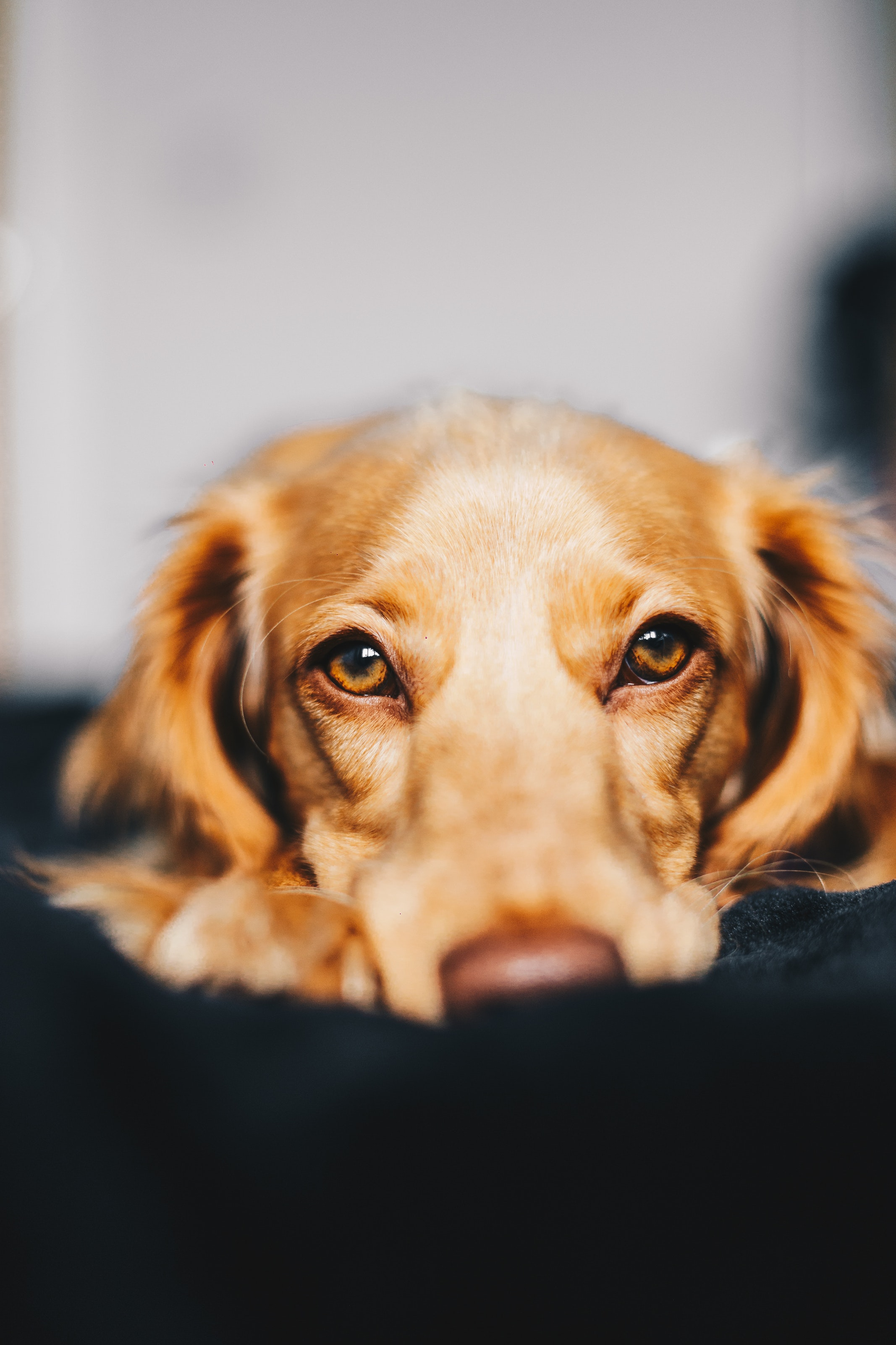 What causes a dog to cry?