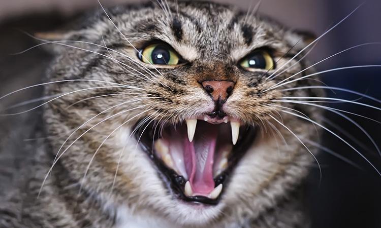 epilepsia en gatos que hacer