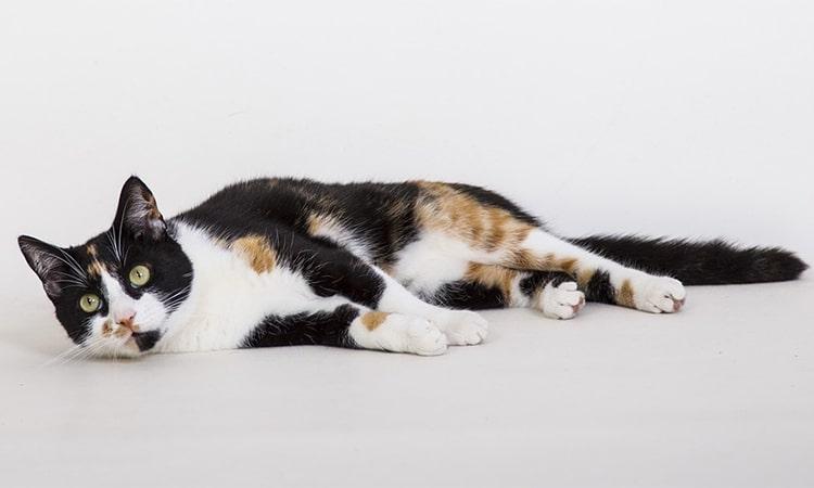 enfermedad mental gato
