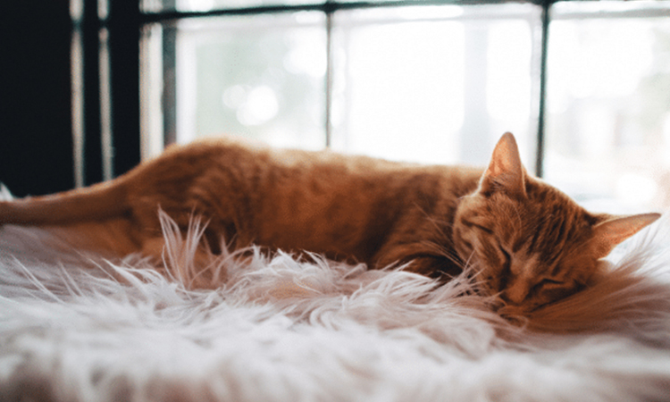 como saber si tu gato esta enfermo