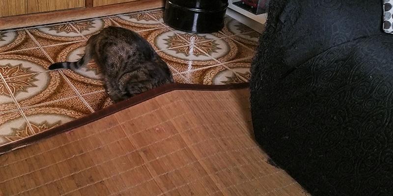 gato escondido alfombra
