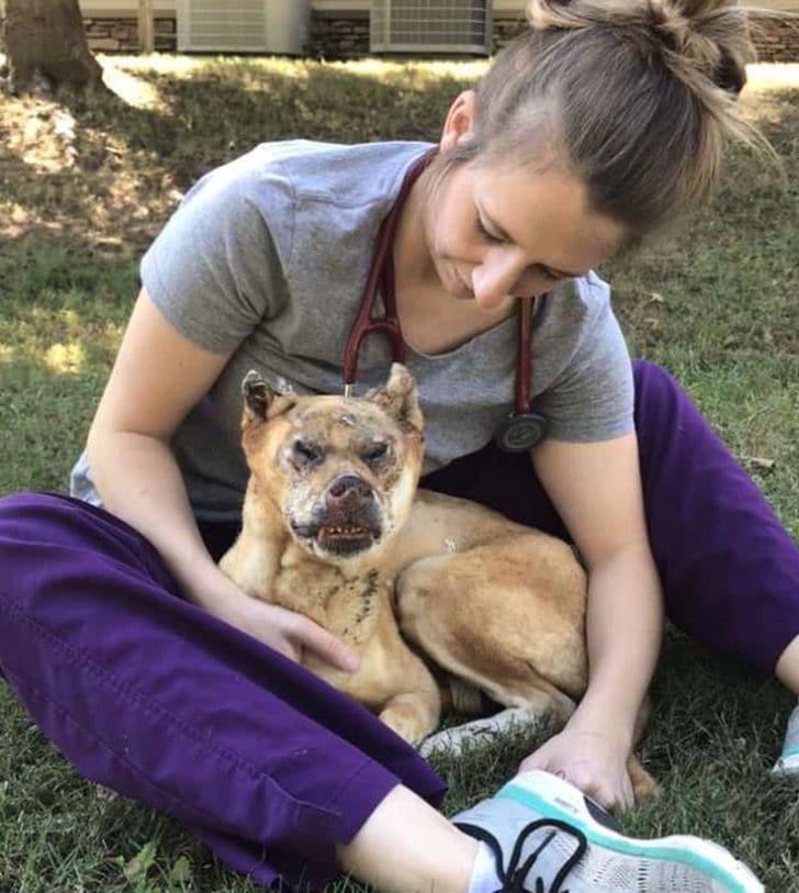 veterinaria-cuida-perro-quemado