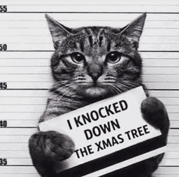 gato navidad prision