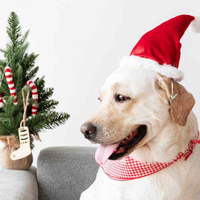 adoptar perro navidad