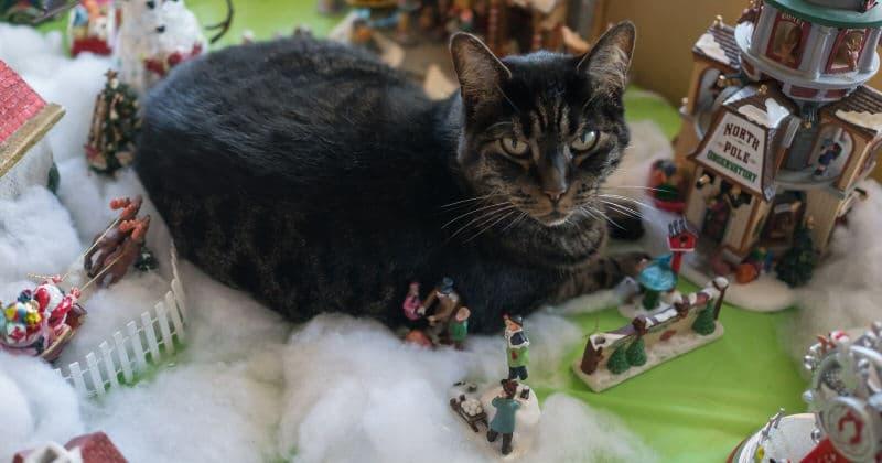 gatto-fissa-obiettivo