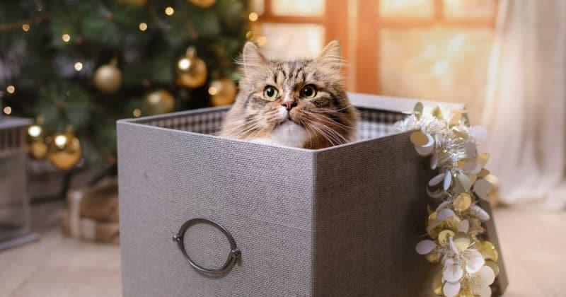 gatto-dentro-un-pacco