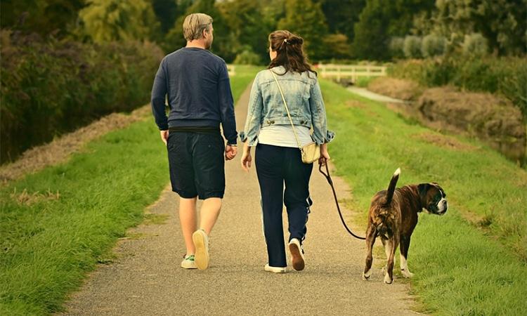 familia perro ley divorcio