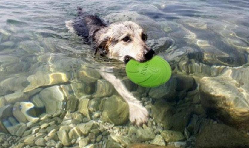 juguete perro olii frisbee