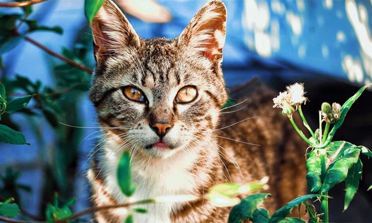sindrome-haw-gato