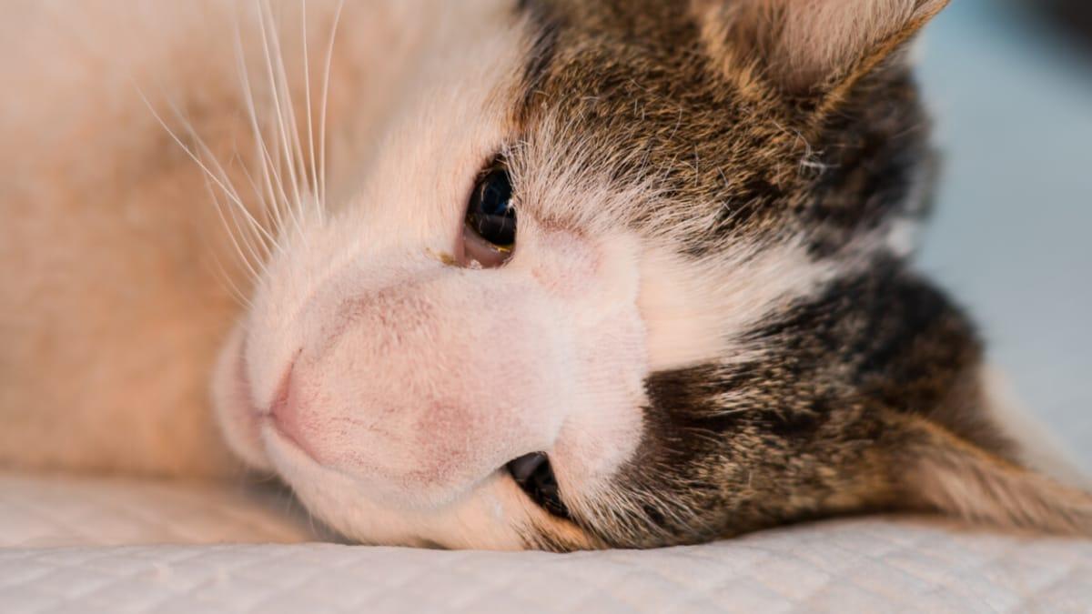 Bei katzen erkennen krebs Krebs bei