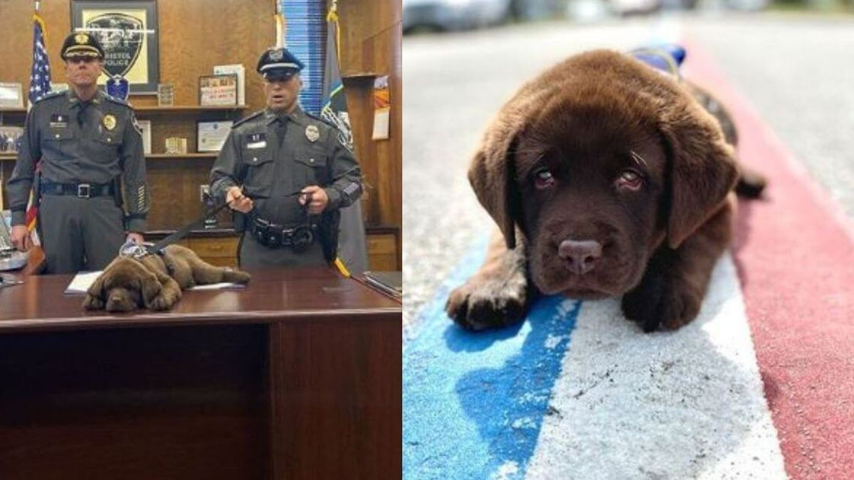 WATCH: Police puppy unable to stay awake through his own swearing-in  ceremony