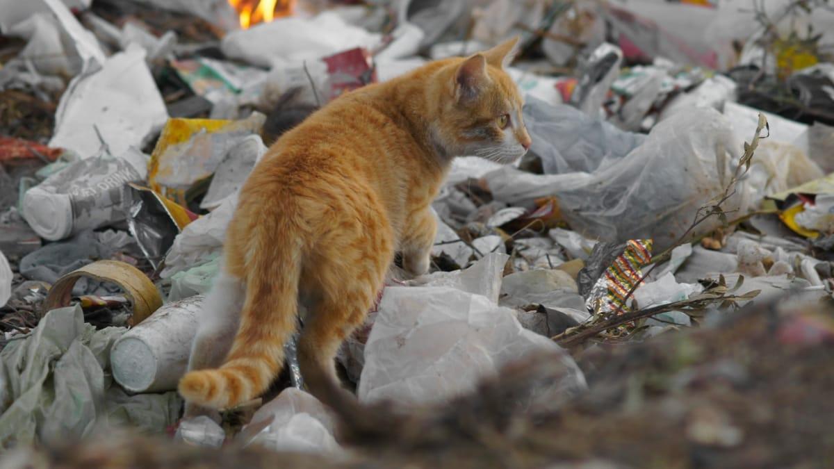 Tiran a un gato a un contenedor de basura, mas la vida da un giro  extraordinario