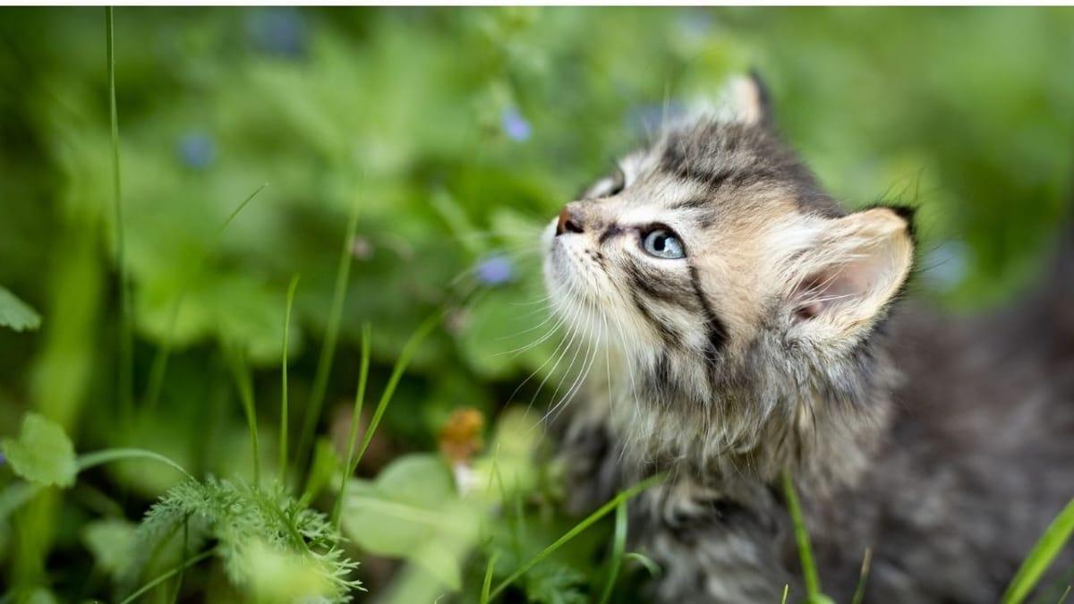 Giardia nel gatto sintomi