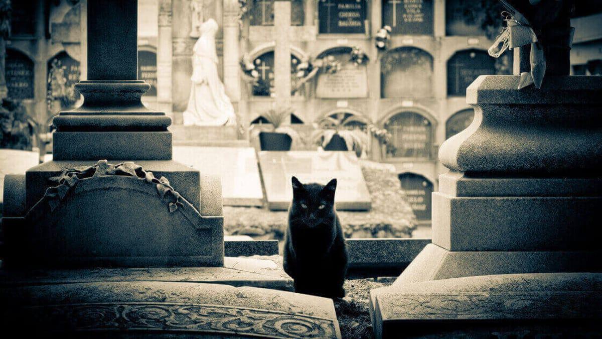 Día de los Difuntos: ¿por qué a los gatos les gusta vivir en cementerios?