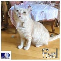 Fivel