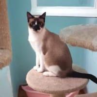Hübsche und soziale junge Katze Gadea