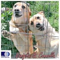 Vaniglia e Cannella