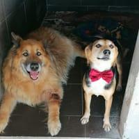 Rex e Joy - super adozione di coppia - inseparabili in canile!!