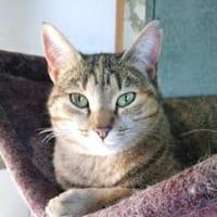 Liebenswerte, soziale Katze Bettina