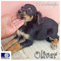 Oliver, Zoe e Snoopy