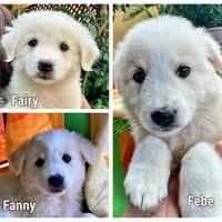 Fairy, Febe, Fanny