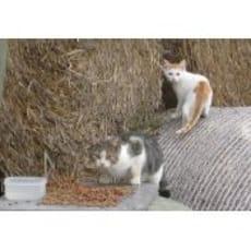 Auswilderungsplätze für scheue Katzen