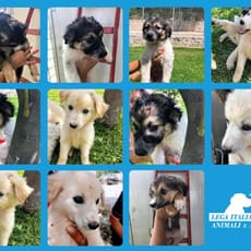 I cuccioli di Carlentini