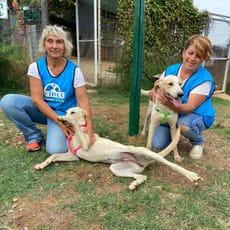 Le cucciole di Cosenza: Bianchina e Betty