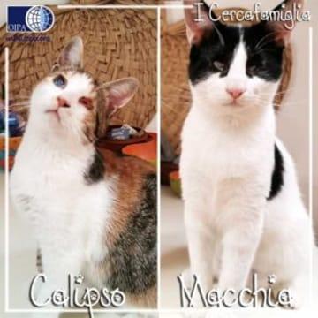 Calipso e Macchia