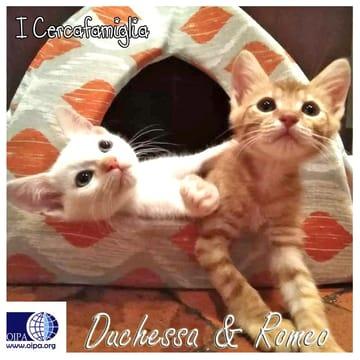 Romeo & Duchessa